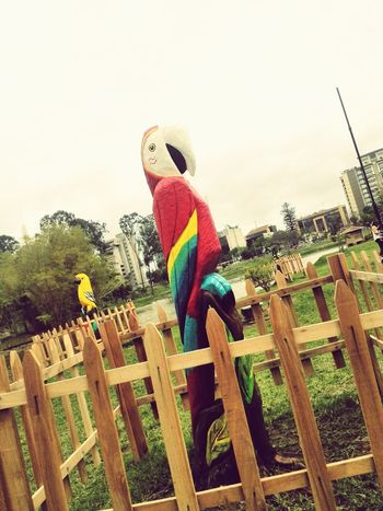 Wood Art Art Gallery Bird Photography Check This Out Adapted To The City