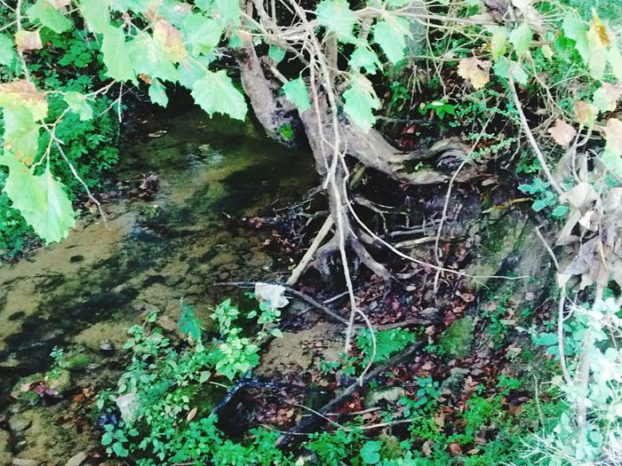 Creekside Creek Bank Tree Trunk Growth Tree Leaf Plant Messy Green Color Nature Outdoors Tranquility Green Overgrown Day Woods Non-urban Scene Growing No People Scenics Remote