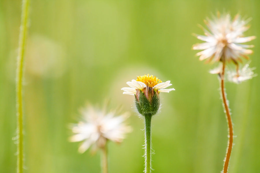 Grass flowers are food sources for small insects. Background; Beauty In Nature Blooming Blossom; Botany; Close-up Day Environment; Flower Flower Head Fragility Freshness Grass; Green; Growth Insect Meadow; Nature No People Outdoors Petal Plant Sunny; Sunshine;