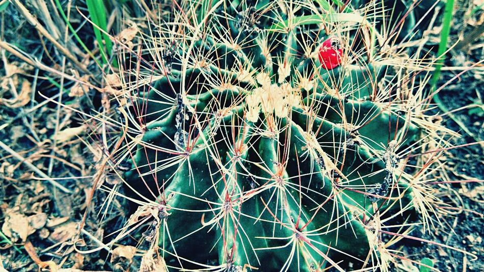 Cactus Country Life EyeEm Nature Lover Eye4photography  Taking Photos Getting Inspired Exploring OpenEdit The Minimalist Eyemnaturelover