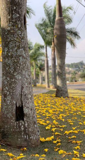 Yellow ground