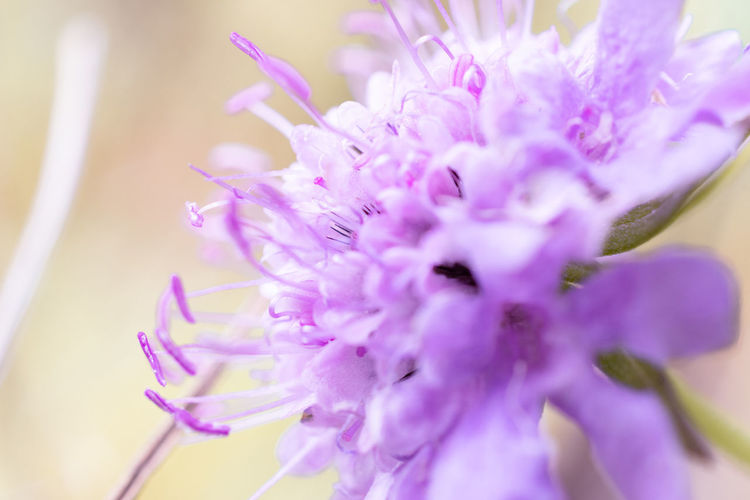 Pink flower (close up) Flower Flowering Plant Freshness Plant Beauty In Nature Vulnerability  Fragility Close-up Petal Flower Head Inflorescence Nature Pink Color Growth No People Selective Focus Purple Outdoors Day Softness Flower Arrangement Bouquet Nikon Nikonphotography Macro