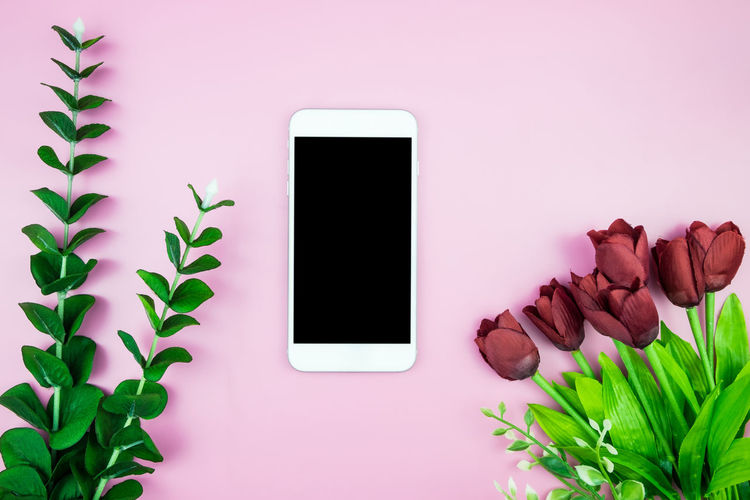 Beauty In Nature Blank Close-up Communication Connection Copy Space Device Screen Flatlay Houseplant Indoors  Leaf Mobile Phone Mock Up Nature No People Pink Color Plant Plant Part Portable Information Device Screen Smart Phone Technology Touch Screen Wireless Technology