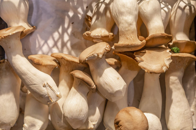 Directly above shot of edible mushrooms for sale in store