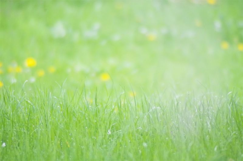 bright shining grass field Beauty In Nature Close-up Day Delicate Environment Field Flower Freshness Grass Green Color Growth Meadow Nature No People Outdoors Plant Selective Focus Summer Tissue Tranquility