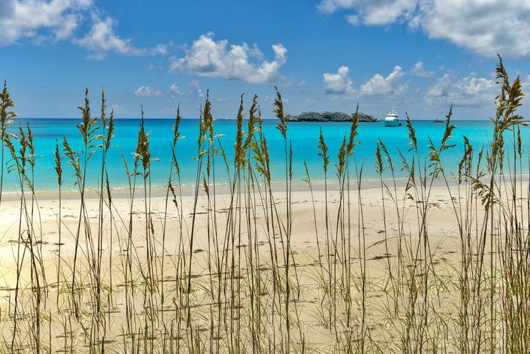 Sea Grass Beach