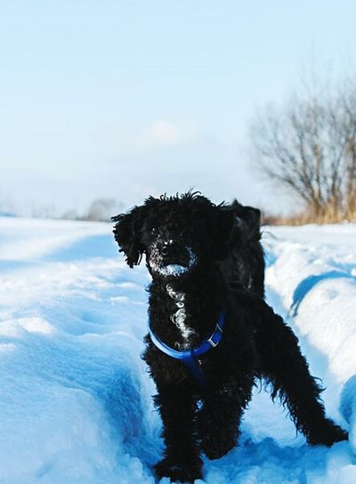 Chapa AnimaLs <3 I Love My Pet My Dog <3 Dog Love собака Dog