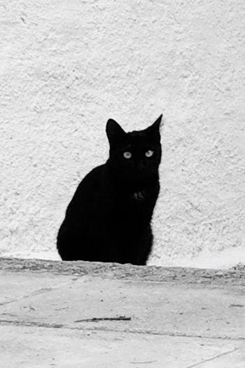 Cat♡ One Animal