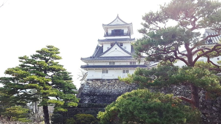Kochi Castle Kochi Castle Japan Castle Tree Architecture Building Exterior Outdoors Built Structure History No People
