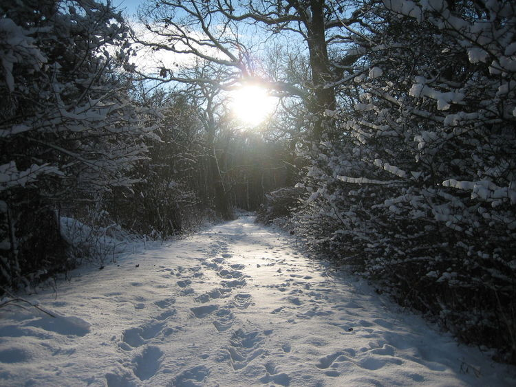 Forest Path Snow Path Walking On Snow Wintertime Beauty In Nature Branch Cold Temperature Footprints In The Snow Forest Forestwalk Frosty Nature No People Outdoors Scenics Snow Snow Covered Snow Forest Sunlight Sunlight And Shadow Sunlight Through Trees Tranquil Scene Tranquility Winter Winter Trees