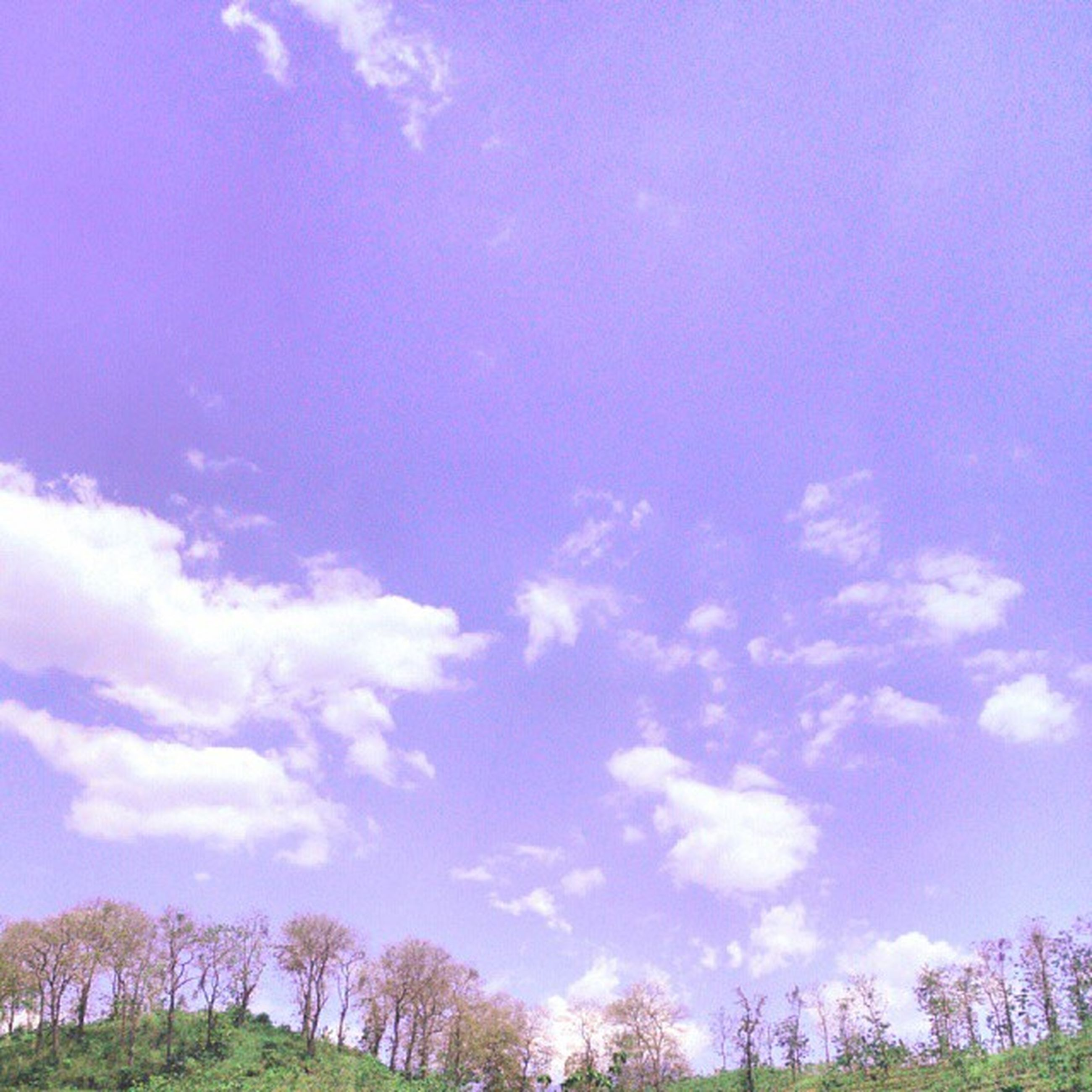 sky, low angle view, tree, tranquility, blue, beauty in nature, cloud - sky, tranquil scene, scenics, nature, cloud, growth, idyllic, outdoors, cloudy, day, no people, non-urban scene, silhouette, sunlight