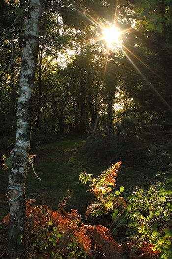 Sunlight Nature Sun Tree No People Beauty In Nature Grass The Week On EyeEm Autumn Forêt And Nature Sunlight Tranquil Scene Green Color Tree Area Beauty In Nature Outdoors Nature Forest Tree Tree Trunk Forest Park Starburst Sun Starburst StarBurstPhotography