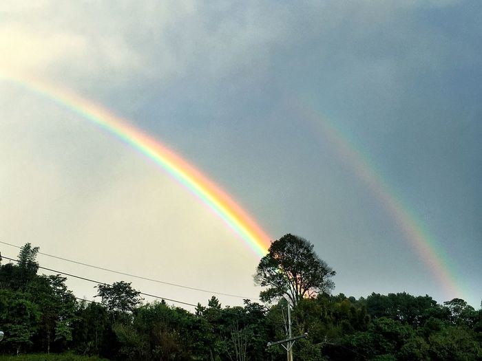 Double rainbow AfterRaining Rainbow Tree Plant Beauty In Nature Sky Scenics - Nature Double Rainbow Nature Tranquility No People Low Angle View Environment Cloud - Sky Multi Colored