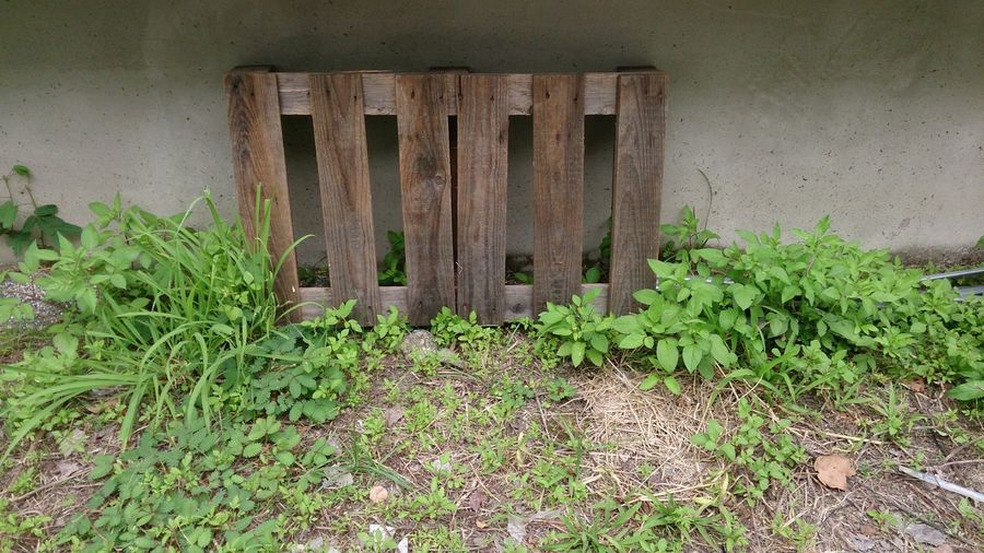 Wood Grass Architecture Plant Woodpile Wooden Plank Plant Life Leaf