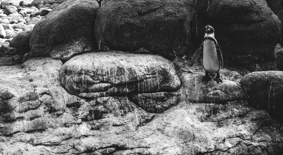 Statue on rock
