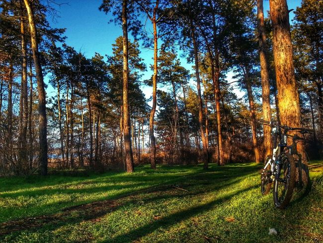Winter traveling Hdr_Collection Traveling Bicycle Forest