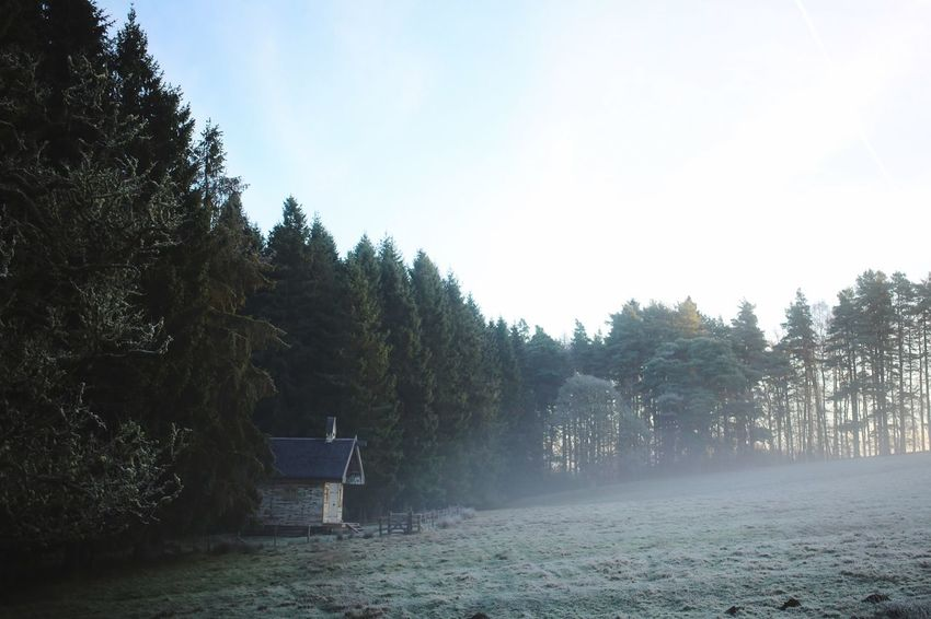 Misty Mist Cabin Cabin In The Woods Forest Hut Tree Plant Sky Nature Seat Tranquility Bench