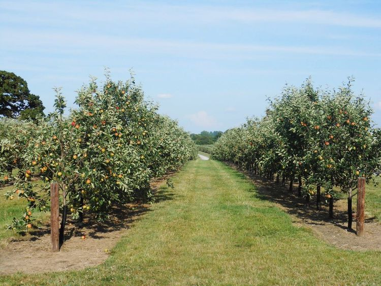 Strawberry Line Old Railway Line Apples Orchard Cider Orchard Apple Orchard Somerset