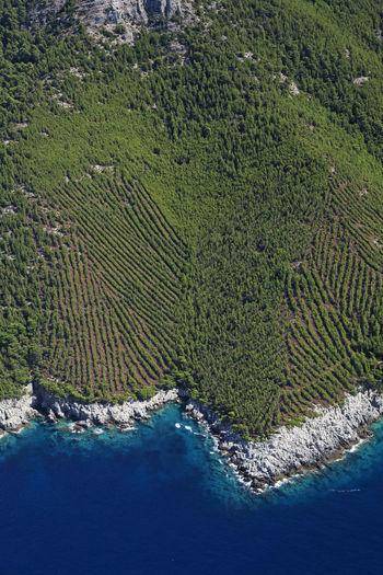 Vineyards on the coastline of the mljet island, adriatic sea, croatia
