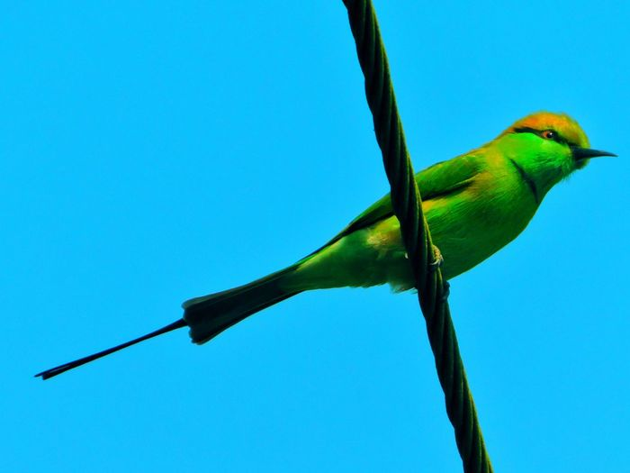 Veda raghu Bird Photography Animals In The Wild Animal Themes Nature Beauty In Nature Clear Sky Outdoors Close-up Day Bird Tree One Animal Awesome Bird