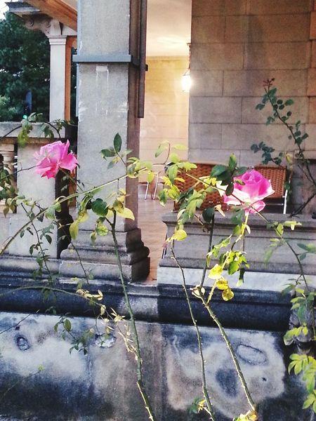 Casadasrosas Roses Rose Garden A Rose
