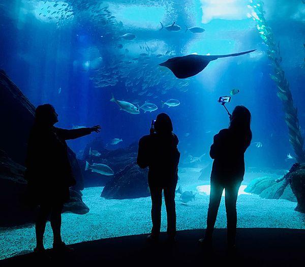 Group of silhouette people at aquarium