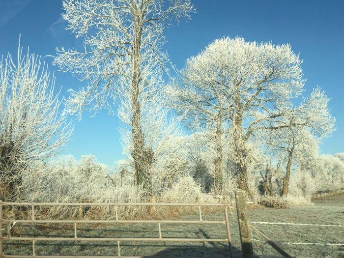 Frozen Trees Beautiful Nature Belowzero Winter Wonderland France