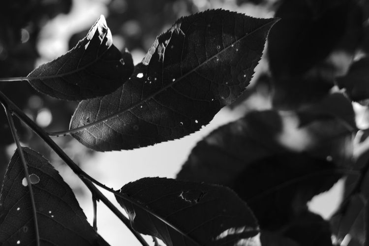 Tree Black And