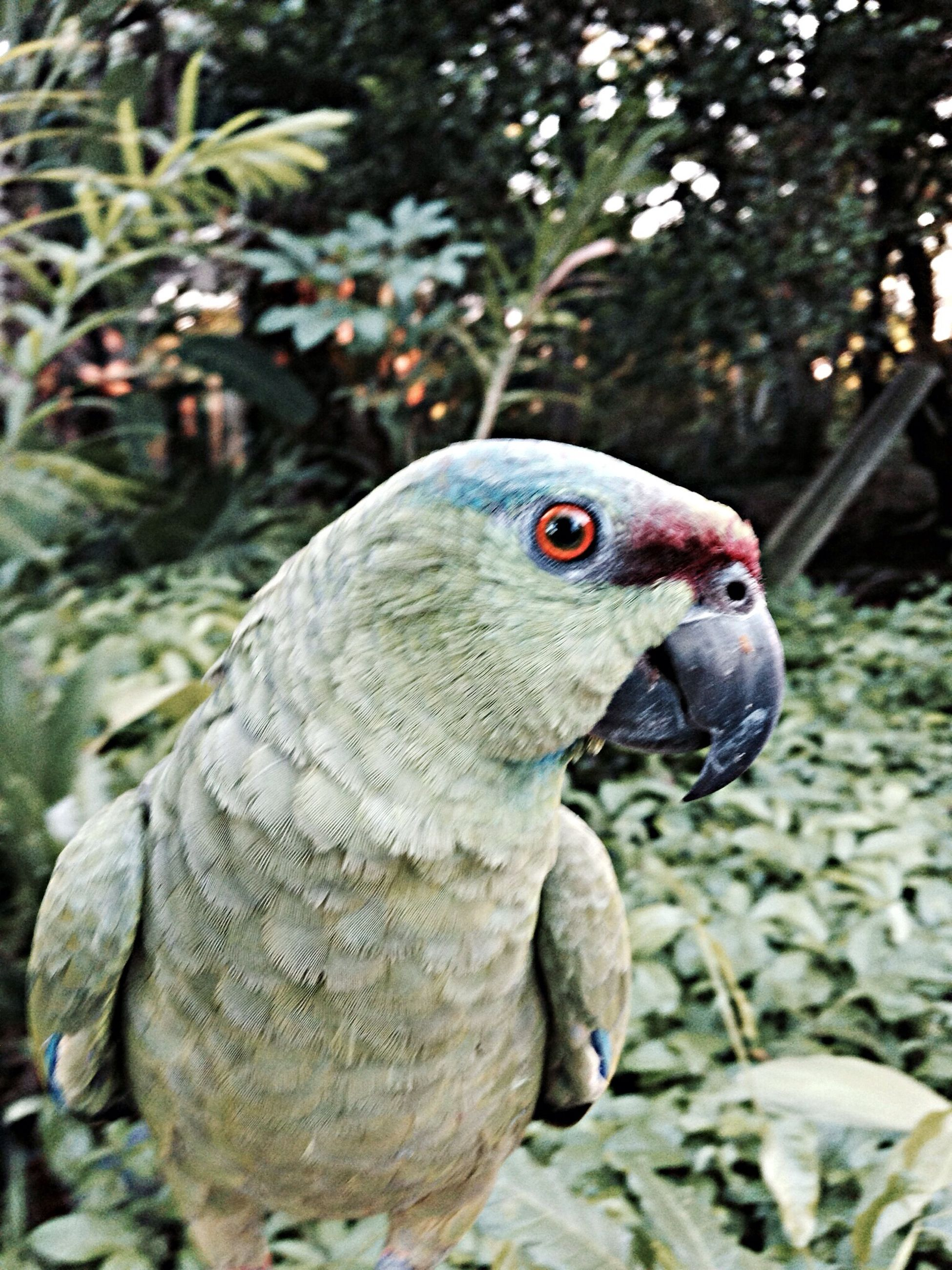 animal themes, one animal, animals in the wild, wildlife, bird, close-up, focus on foreground, beak, side view, nature, animal head, outdoors, day, beauty in nature, no people, zoology, parrot, selective focus, plant, avian