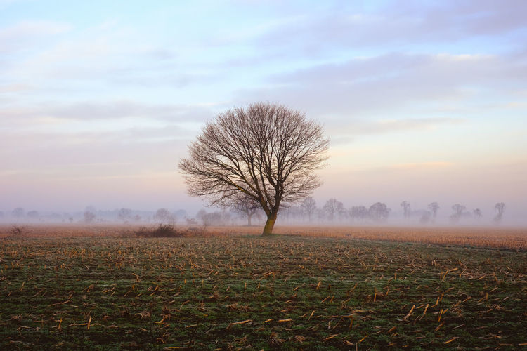 Lonely bare tree in a countryside morning landscape Bare Tree Beauty In Nature Cloud - Sky Environment Field Fog Isolated Land Landscape Nature No People Non-urban Scene Outdoors Plant Remote Scenics - Nature Sky Solitude Tranquil Scene Tranquility Tree