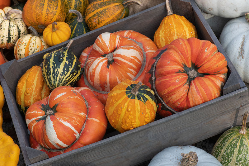 High angle view of pumpkins in crate