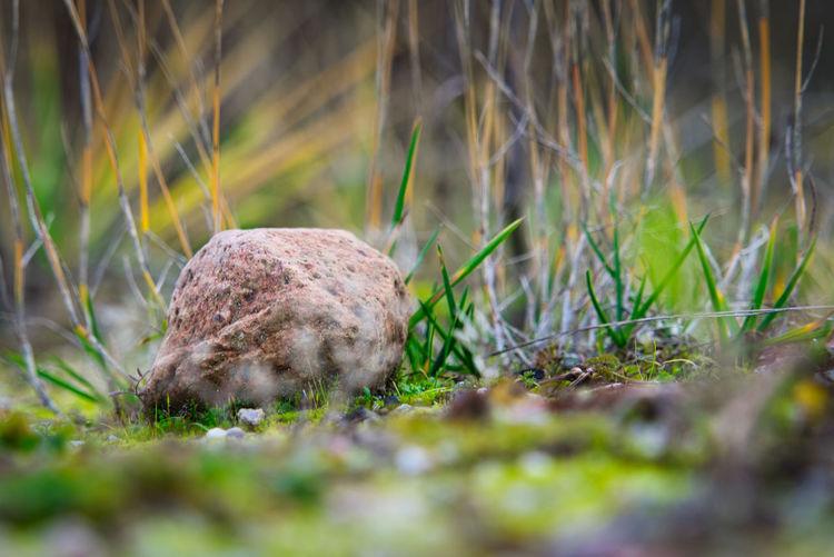 Close-up of animal on grass