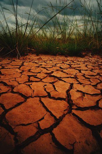 waiting for rain Tree Arid Climate Cracked Drought Environment Sky Landscape Plant Arid Landscape Dead Plant Dried Plant Dried Dry