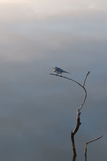 Bird perching on twig against sky
