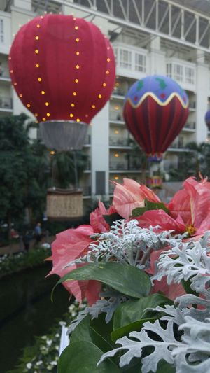 In such a fancy place,I must have looked pretty funny climbing on stuff to get just the right shot. Enjoying Life Gaylord Opryland Resort Plants 🌱 Colors Flower Colorful Close Up Hotairballoons Mlbtradeshow Christmas Lights Christmas Decorations Love ♥ Lifeisgood Water