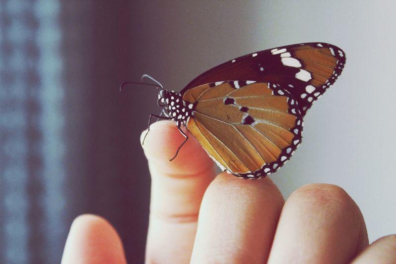 Butterfly Human
