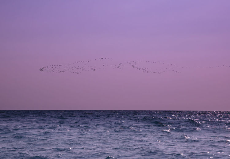 Flock Of Birds Flying Over Sea During Sunset