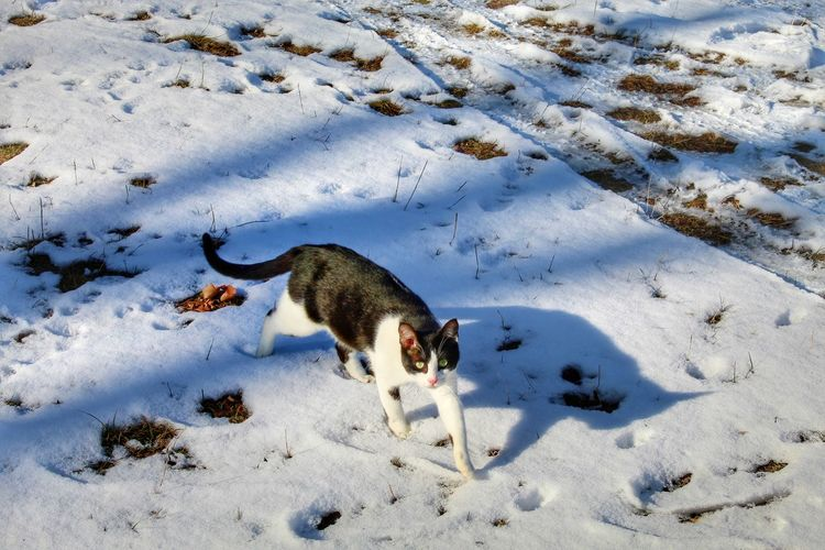 High angle view of a dog in snow