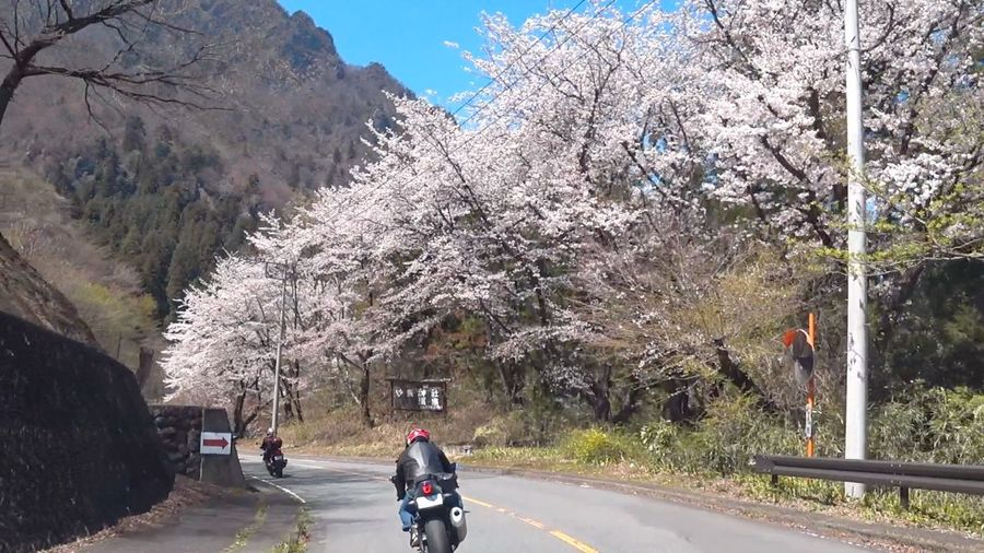 Rear view of man riding motorcycle on cherry tree