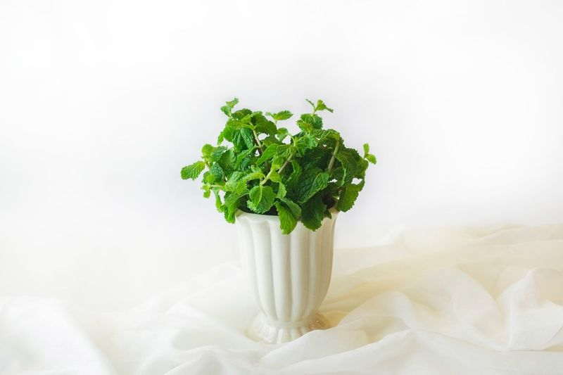 Papermint Mint Leaves Food Healthy Eating Wellbeing Freshness Green Color Vegetable Leaf Herb