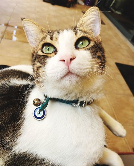 Cat Collar Evil Eye EyeEm Selects Pets Domestic Mammal Animal Animal Themes Cat Domestic Animals Domestic Cat Looking At Camera Feline Relaxation Portrait Whisker