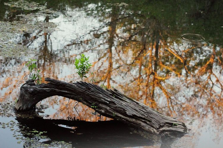 Preserve Woods Water Beauty In Nature Nature Taking Photos Enjoying Life Hi! Check This Out Log Reflection Sunset