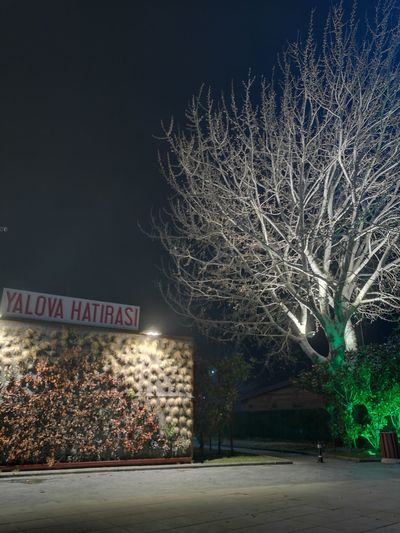 Tree Night Outdoors City No People Winter Relaxing City Yalovasahili Turkey Nightphotography Huaweiphotography Architecture