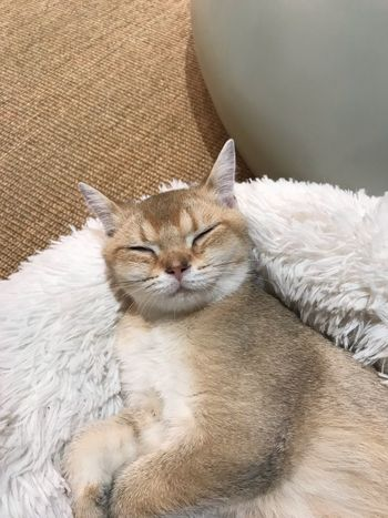 Domestic Cat Cat Feline Pets Mammal One Animal Animal Themes