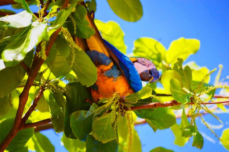 Bird Bird Photography Home Tree Beautiful Day Hello World Macaw Arara Hanging Out Colors