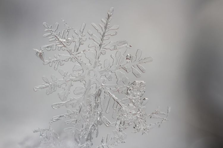 Close-up of snowflake during winter