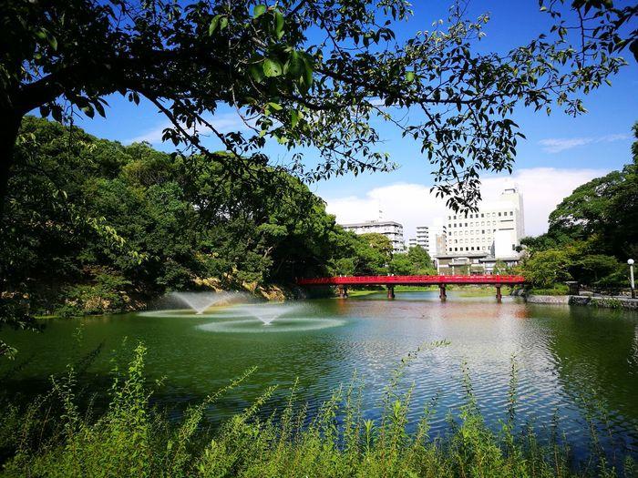 HuaweiP9 Osaka Tennoji-koen Water Tree Outdoors Day Nature Growth No People