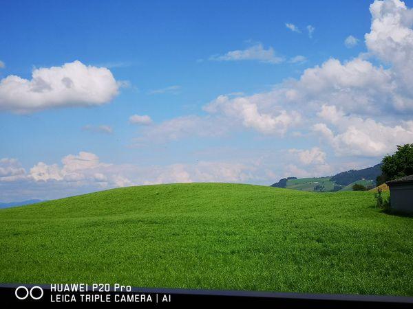 Land and Green Tea Crop Rural Scene Irrigation Equipment Agriculture Cereal Plant Crop  Vegetable Sky