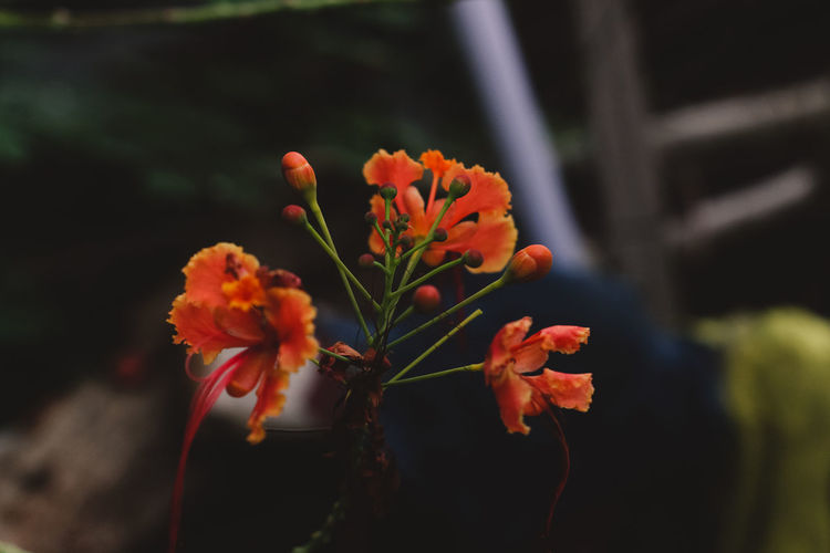 Beauty In Nature Close-up Day Flower Flower Head Flowering Plant Focus On Foreground Fragility Freshness Growth Inflorescence Nature No People Orange Color Outdoors Petal Plant Plant Stem Selective Focus Vulnerability