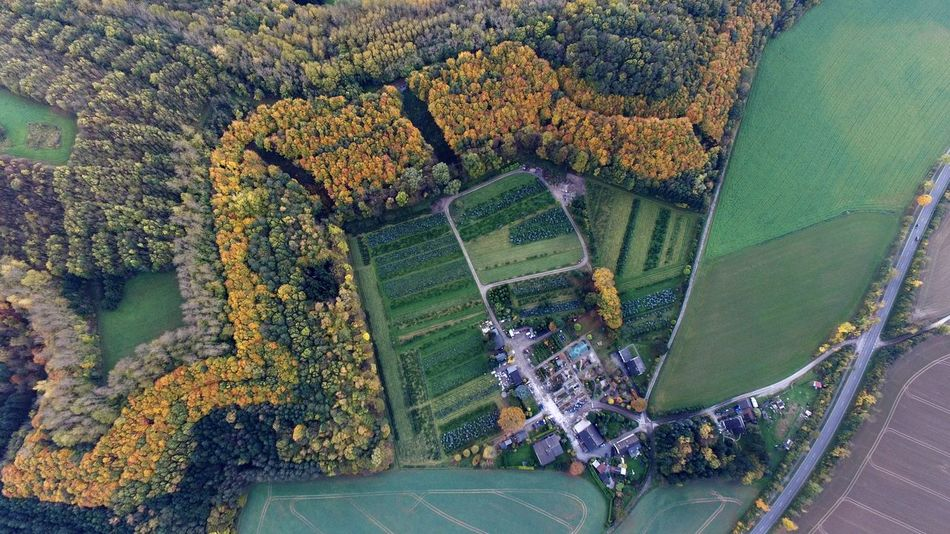 Perspectives On Nature Green Color No People Nature Day Outdoors Sky Flying High 500meters Dji Phantom Djiphantom Forest Wood Birds Eye View Fall Fall Colors Trees Baumschule Germany EyeEm Ready   Go Higher